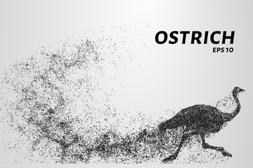 Ostrich from the particles. The ostrich consists of small circles. Vector illustration.