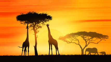 giraffes in Africa at sunset