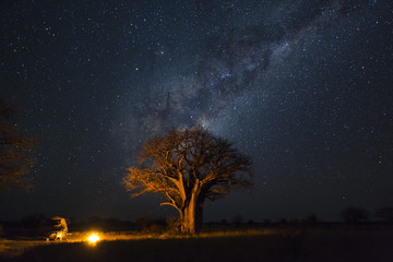 Camping under baobab's and milkyway Wall mural