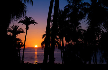Romantic Tropical sunset on beach with palm trees in Baja California
