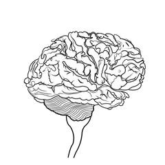 brain isolated on white background, vector illustration