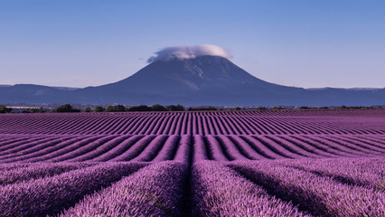 Tuinposter Lavendel paysage e lavande à Valensole