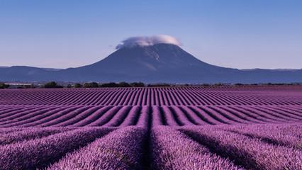 Türaufkleber Lavendel paysage e lavande à Valensole