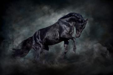 Black stallion in motion against dark dust clubs
