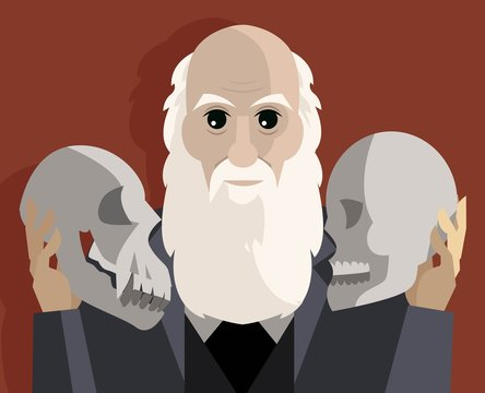 great biologist with two skulls thinking about theory of evolution