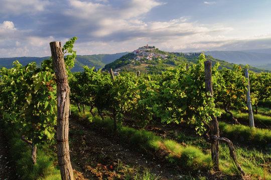 Motovun and vineyards, Istria, Croatia.
