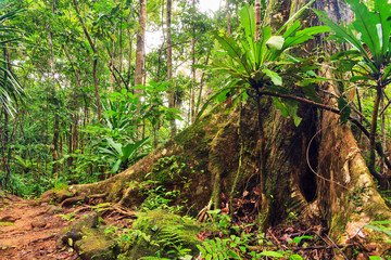 Beautiful view of the rainforest jungle of the Masoala National Park in Madagascar, a UNESCO world heritage site