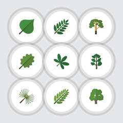 Flat Icon Nature Set Of Decoration Tree, Leaves, Maple And Other Vector Objects. Also Includes Acacia, Leaves, Oaken Elements.