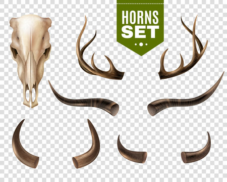 Cow Skull And Horns Set
