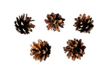 Pine cones isolated.