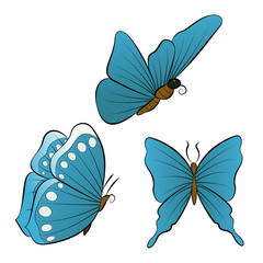 Flying butterfly with blue wings color.
