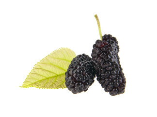 Mulberry isolated on white background close-up