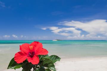 青い海とハイビスカスの花 沖縄イメージ