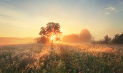 Photo sur Plexiglas Morning Glory Colorful autumn sunrise on meadow