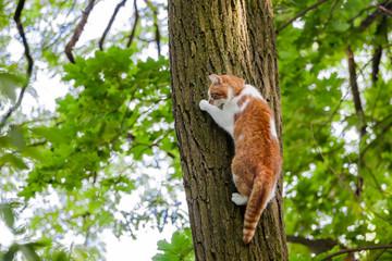 Katze klettert einen Baum hoch