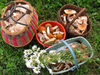 Baskets with mushrooms
