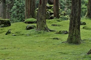 福井県勝山市の苔が有名な平泉寺