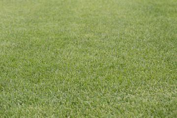 Football field grass. Abstract Texture.