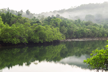 A view of the mangroves with reflection in the  canal.