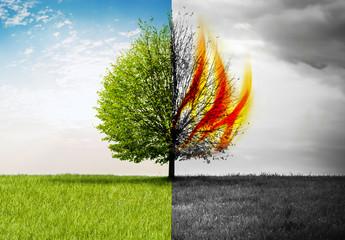 Baum Grün und Brennend