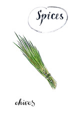 Watercolor young green fresh chives bunch
