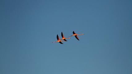 Foto op Aluminium Flamingo Flying Flamingos on blue Sky