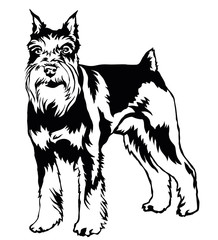 Decorative standing portrait of dog Miniature Schnauzer, vector illustration