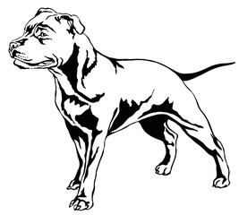 Decorative standing portrait of dog Staffordshire Bull Terrier vector illustration