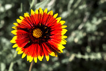 Orange Flower With Yellow Tips Photos Royalty Free Images