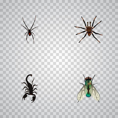 Realistic Housefly, Spinner, Poisonous And Other Vector Elements. Set Of Insect Realistic Symbols Also Includes Insect, Arachnid, Spinner Objects.