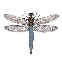 Darter dragonfly - 3D render