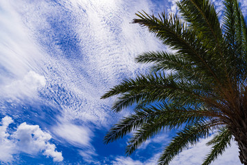 Palm tree, blue sky. Okinawa, Japan, Asia.