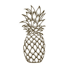 Pineapple fruit doodle hand drawn vector illustration