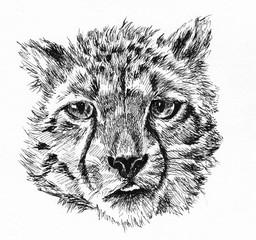 leopard baby head sketch hand drawn illustration