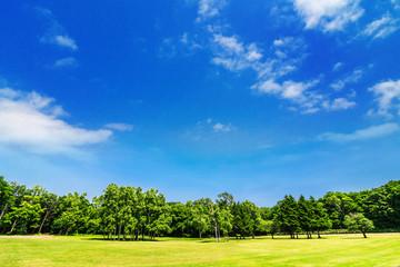 木々と青空