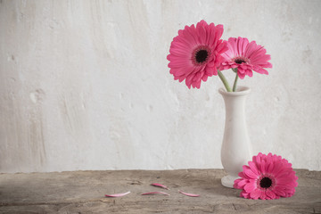 Stores à enrouleur Gerbera pink gerbera on background old wall