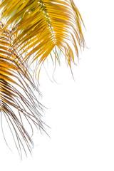 palmes mûres sur fond blanc