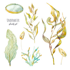 Watercolor underwater plants set. Hand drawn pond flora. Illustrations isolated on white background: water lily leaf, alga, laminaria, seaweed.