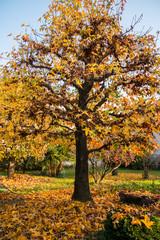 I colori delle foglie di autunno