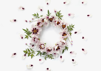 Top view of floral wreath frame made of white peonies, big green leaves, small pink flowers and falling petals on white background.