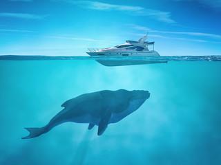 Huge whale near