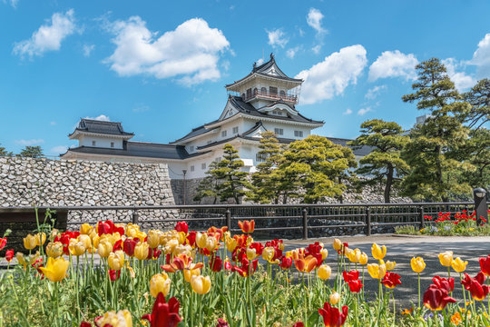 チューリップと富山城
