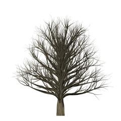Leafless tree isolated on white background, 3D Illustration