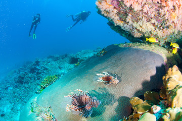 Wonderful and beautiful underwater world with corals, fish, scuba diver