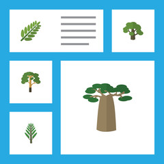 Flat Icon Nature Set Of Baobab, Wood, Leaves And Other Vector Objects. Also Includes Acacia, Willow, Leaf Elements.