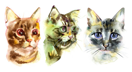 European shorthair cat red tabby, kitten lies on white background, isolated, hand draw watercolor painting.