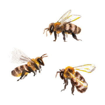 Raster realistic watercolor set of some bees isolated on white. Animal and biological themes, entomologic image for thematic sources, design element, summer decoration.