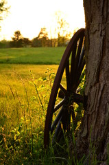 Amish buggy wheel leaning against a tree in the country