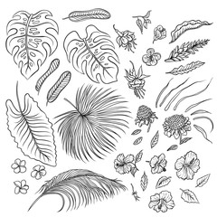 Vector sketch black and white set of isolated elements. The leaves of tropical plants and exotic flowers buds. Graphic outline drawing collection herb and vegetation monsoon rainforest.