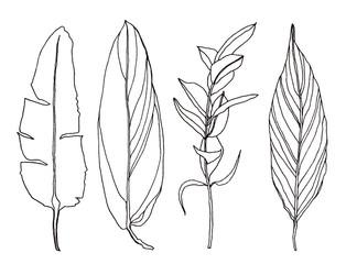 Palm leaves pen handrawn illustration